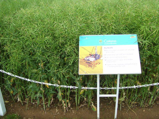 Monsanto oil seed rape oil rig imagery
